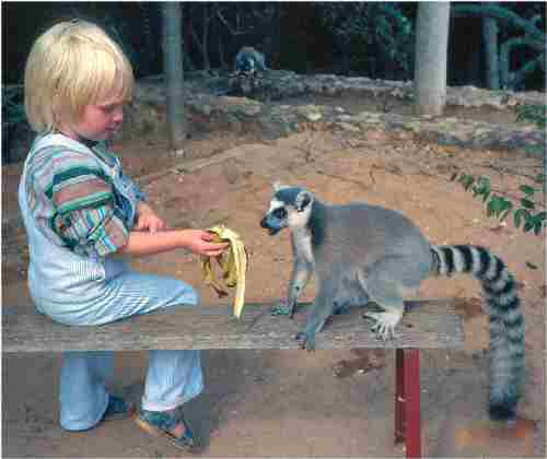 My daughter feeding a lemur with banana